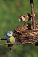 les oiseaux aux mangeoires